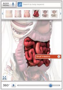 BodyMaps Screenshot vom Verdauungssystem